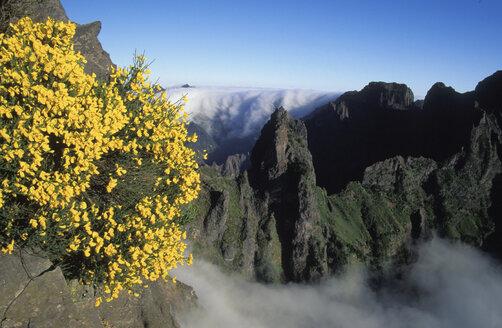 Madeira, Portugal - 00729HS
