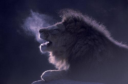 Lion - 00169EK