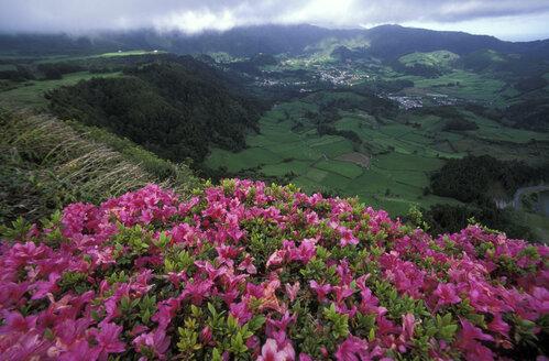 Azores, Sao Miguel, Furnas valley - 00017HS
