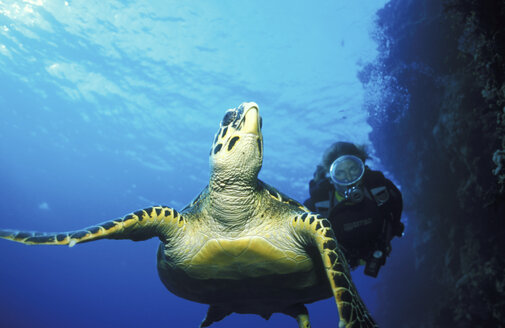 Turtle swimming in sea with person in scuba diving suit in background, low angle view - 00490GN