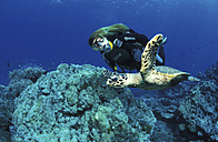 Thailand, diver with turtle - 00398GN