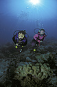 Scuba divers over corals - GN00558