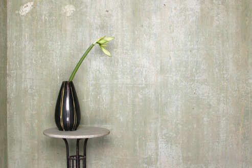 Lonely flower on table - 00170BM-U