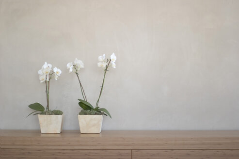 Two potted orchids in front of wall on shelf - 00138BM-U
