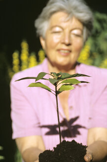Senior woman planting plant - PEF00333