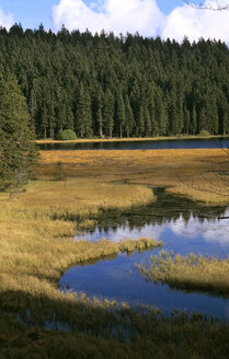 Germany, Bavarian forest, Großer Arbersee - HSF00916