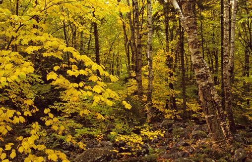 USA, White Mountains, New Hampshire - HS00904