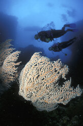 Divers and corals - GN00564