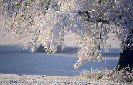 Germany, Bavaria, snow-covered tree on landscape - EK00327