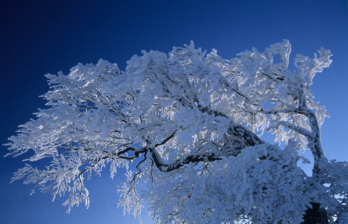 Germany, Black forest snow-covered trees - EK00316