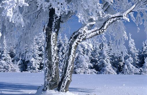 Germany, Black forest snow-covered trees - EK00310