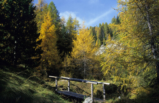 Austria, Hohe Tauern National Park, Larches in autumn - 00260EK