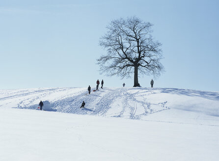 People luging on a hill, Germany - PEF00438