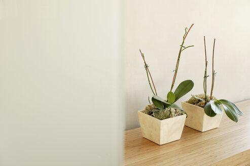 Shelf wit two flower pots - BMF00216