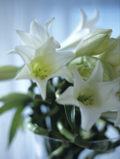 Bunch of lilies - HOEF00014