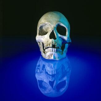Skull - MB00189