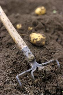 Potato field - CHKF00134
