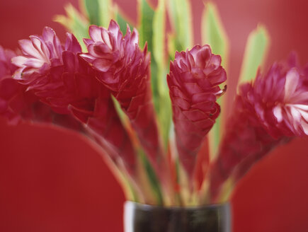 Ginger flowers, close-up - HOEF00187