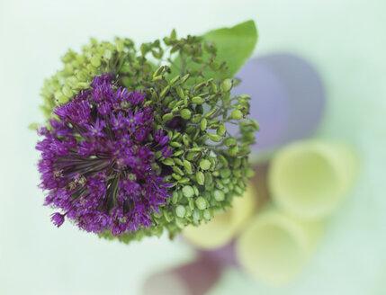 Allium Giganteum, close-up - HOEF00178