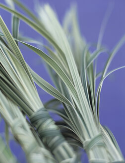 Bunches of sedge grass, close-up - HOEF00162