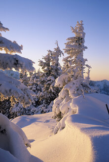 Germany, Bavaria, Spitzing, snow covered trees in twilight - FFF00688