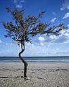 Italy, Apulia, Tree at beach - MOF00085