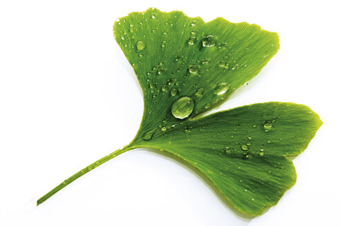 Ginko leaf with water drops, close-up - 04209CS-U