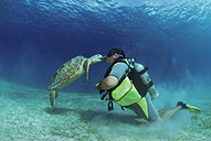 Philippines, scuba diver with green turle, underwater view - GNF00775