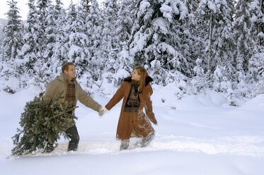 Young couple carrying Christmas tree in snow - HHF00453