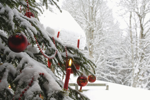 Burning candle on Christmas tree covered with snow, close-up - HHF00521