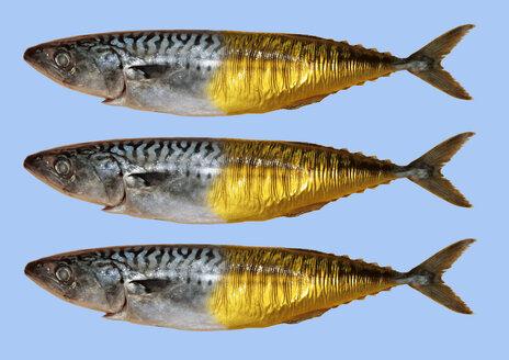 Fresh smoked mackerels - THF00299
