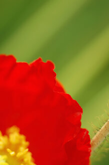 Poppy seed, close-up - SMF00021