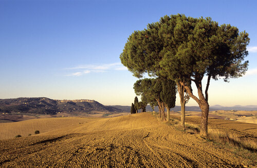 Italy, Tuscany, View of ploughed field - HSF00982
