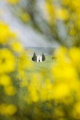 Italy, Tuscany, landscape - MRF00785