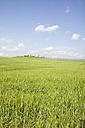 Italy, Tuscany, landscape - MRF00782