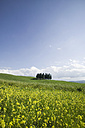 Italy, Tuscany, landscape - MRF00779