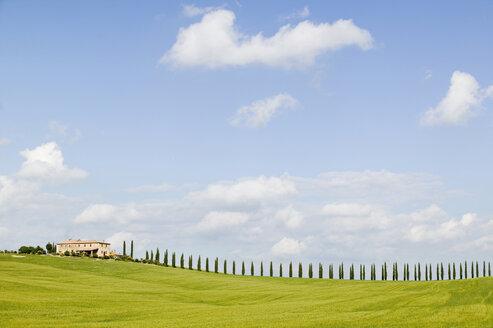 Italy, Tuscany, landscape - MRF00719