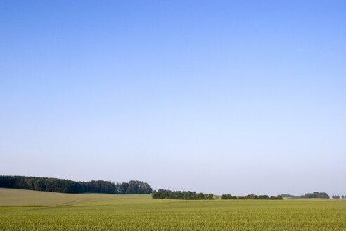 Fields in Bavaria, Germany - LFF00051