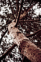 Conifer tree, low angle view - DW00037