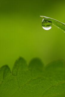 Water drop on blade of grass, close-up - SMF00044