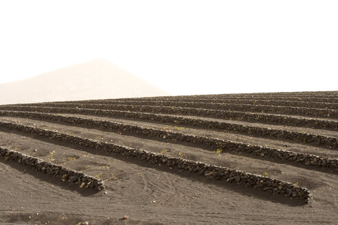 Spain, Lanzarote, field with stone walls - ABF00145