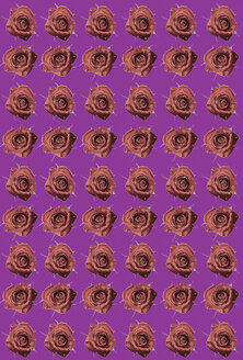 Floral pattern with roses, close-up - TLF00168