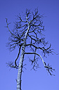 Germany, Bavaria, Dead tree - TC00259