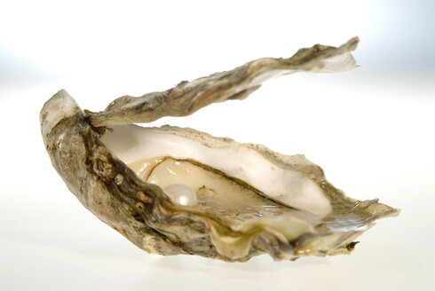 Pearl in oyster, close-up - NHF00563