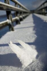 Germany, Bavaria, Ammersee,  Pair of angelic wings - CK00191