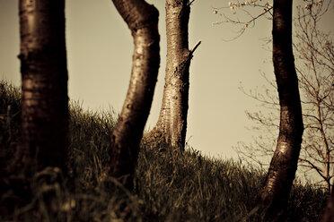 Germany, Bilfingen, Tree trunks, close-up - DW00125