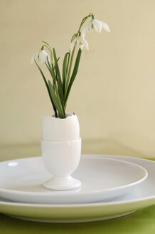 Snowdrop in eggshell (Leucojum) - ASF03528