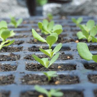 Seedlings in vessel, close-up - CHK00699