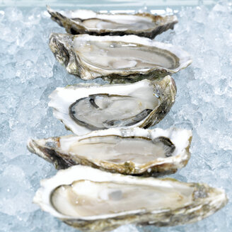 Oysters on crushed ice, close-up - CHK00570