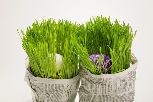 Easter eggs in grass, wrapped wrapped in newspaper, close-up - MNF00143